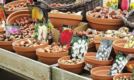 Fleurissez votre balcon ou jardin en soutenant l'Accueil d'Abord !