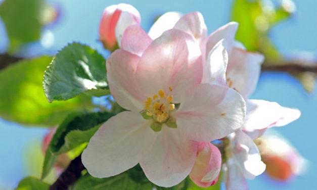 Des propositions pour le Carême et Pâques